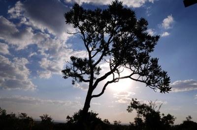 MPF: Impactos ambientais e desenvolvimento sustentável do Matopiba são tema de audiência pública promovida pelo MPF