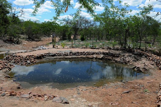 MINISTÉRIO DO MEIO AMBIENTE: MMA recupera áreas degradadas no Piauí