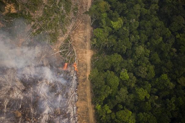 Greenpeace: Para especialistas, zerar o desmatamento é possível. E urgente