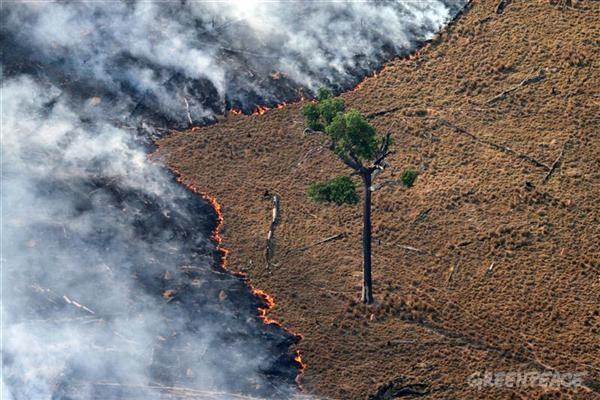 AMAZÔNIA: Estudo liga paraísos fiscais a desmatamento na Amazônia