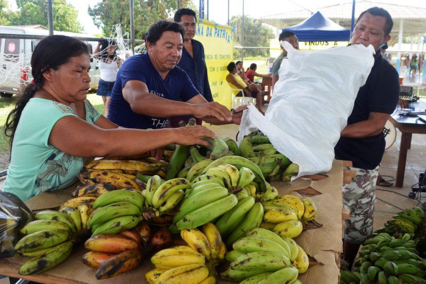 CIR: Etnoregiões na terra indígena Raposa Serra do Sol promovem feiras regionais para fortalecer produção sustentável