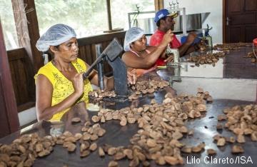 ISA: Economia da floresta: o que deveria estar na pauta do próximo presidente