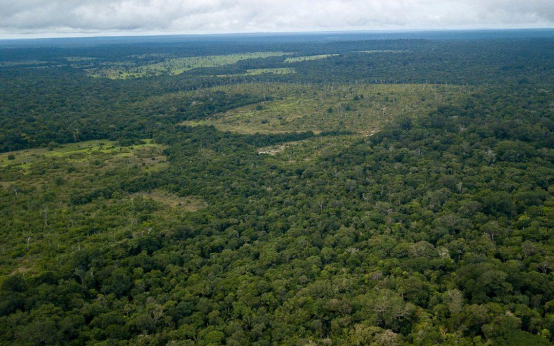 AMAZÔNIA NOTÍCIA E INFORMAÇÃO: Pandemia terá impacto direto no desmatamento da Amazônia