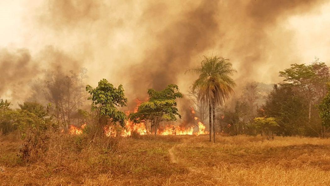 """CIMI: """"O futuro do povo Apyãwa está em risco"""": invasões e queimadas devastaram TI Urubu Branco em 2019"""