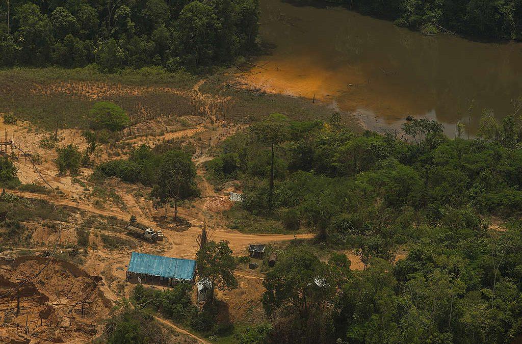 GREENPEACE: Grileiros, madeireiros e garimpeiros não fazem home office