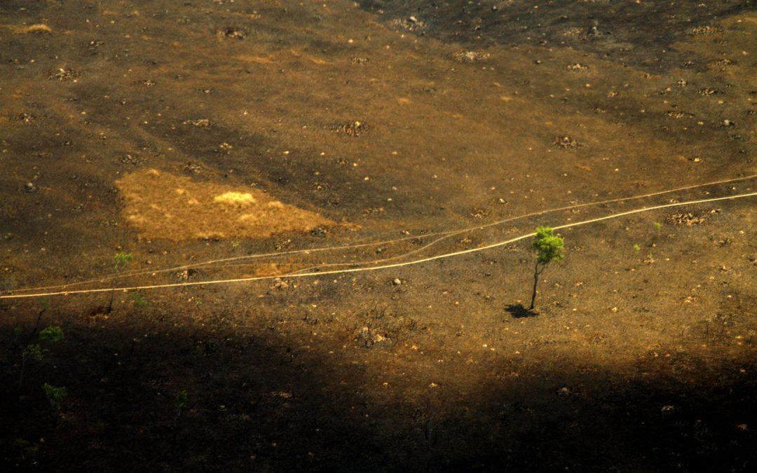 AMAZÔNIA REAL: BR-319 ameaça povos indígenas 1: – Resumo da série