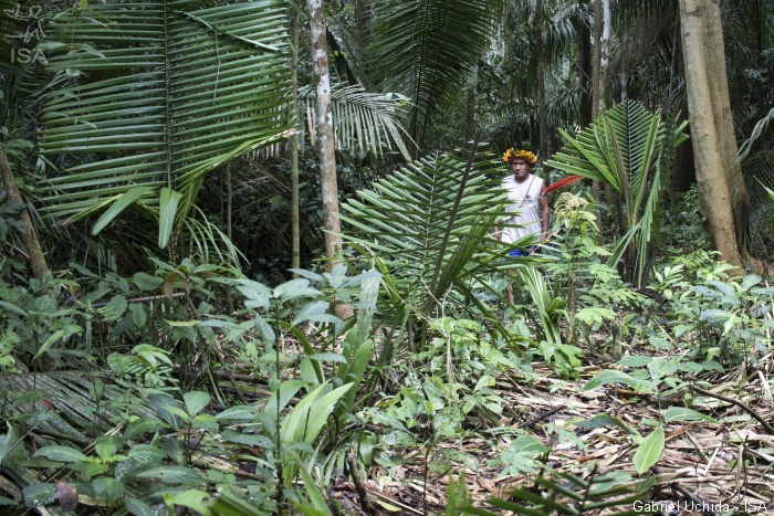 """DE OLHO NOS RURALISTAS: Invasão de madeireiros no """"arco do desmatamento"""" aumenta risco de contágio na Amazônia"""