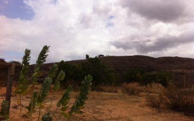 CÂMARA DOS DEPUTADOS: Sancionada lei que altera regras de transferência de terras federais para Roraima e Amapá