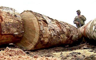 RBA: Em meio a desmatamento recorde na Amazônia, PL da Grilagem é 'coroação de todas as ações ilícitas'
