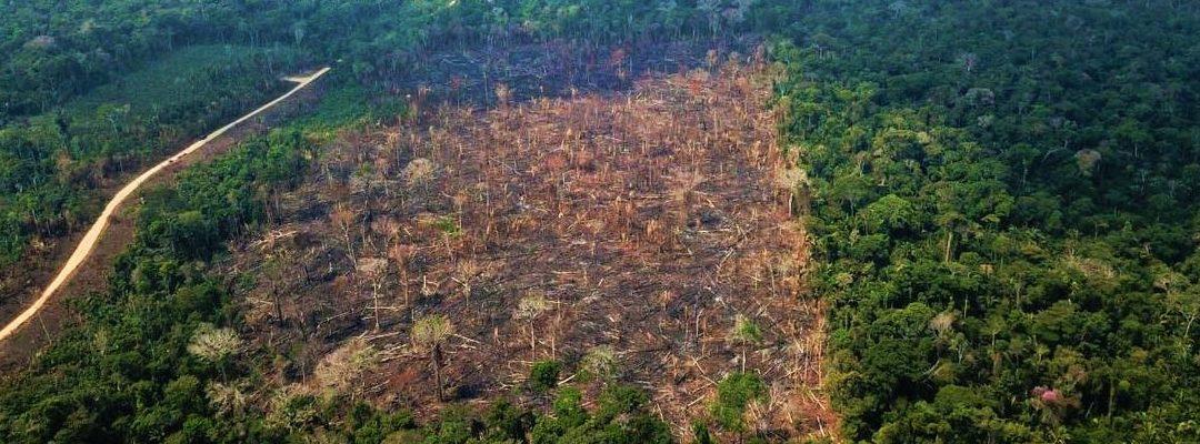 INA: Leia a Nota de Repúdio – Projeto de Lei amplia injustiças, desmatamento e caos agrário