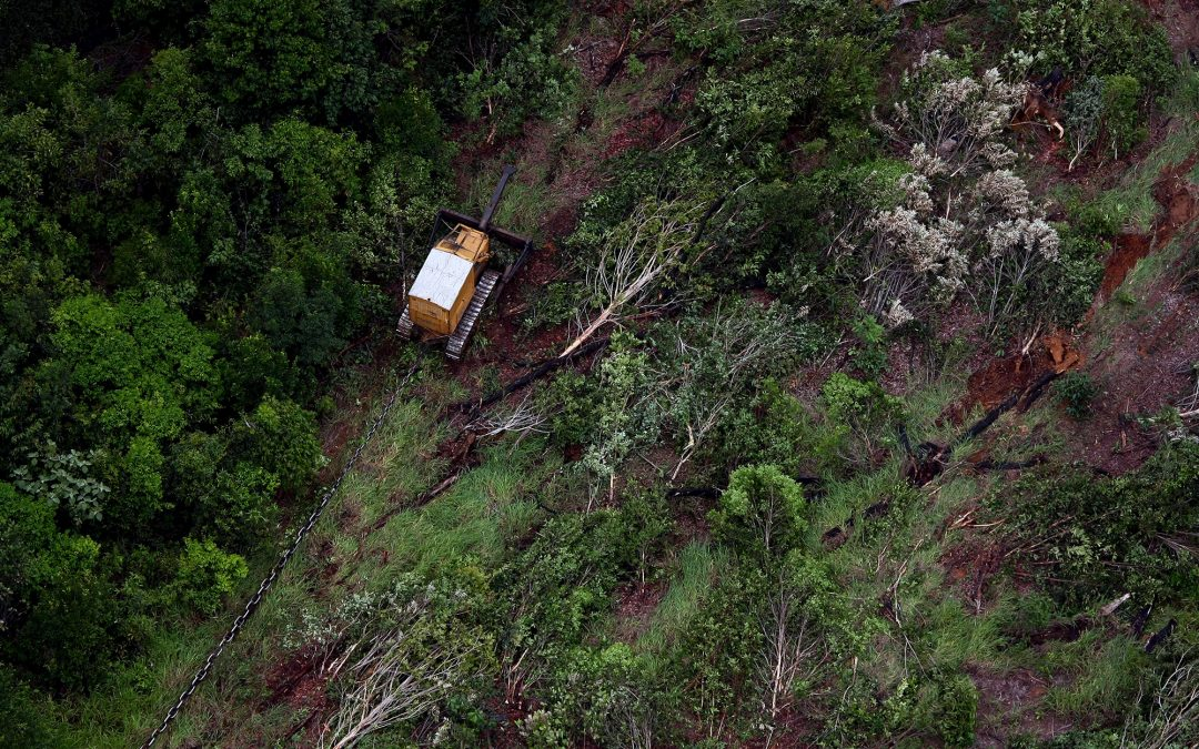 AMAZÔNIA REAL: A Amazônia segundo Lúcio Flávio Pinto Fiat Lux