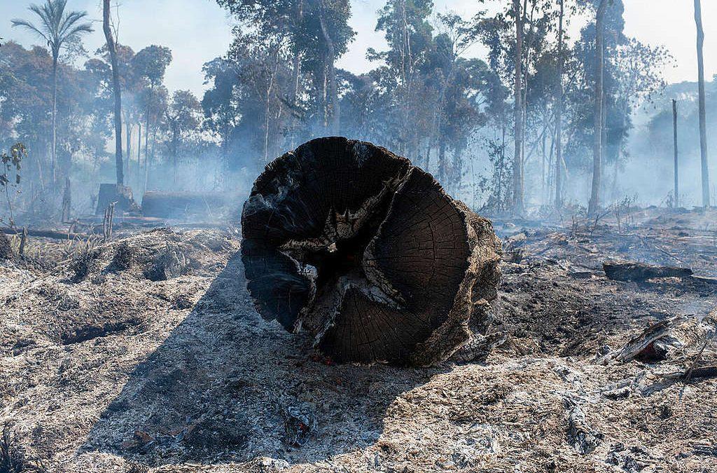 GREENPEACE: Cronologia da destruição anunciada