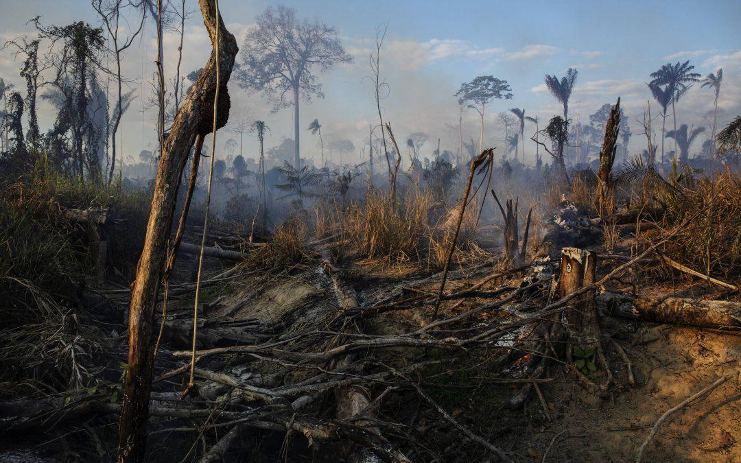 FOLHA DE SÃO PAULO: Amazônia sob Bolsonaro Os desafios para manter a floresta em pé
