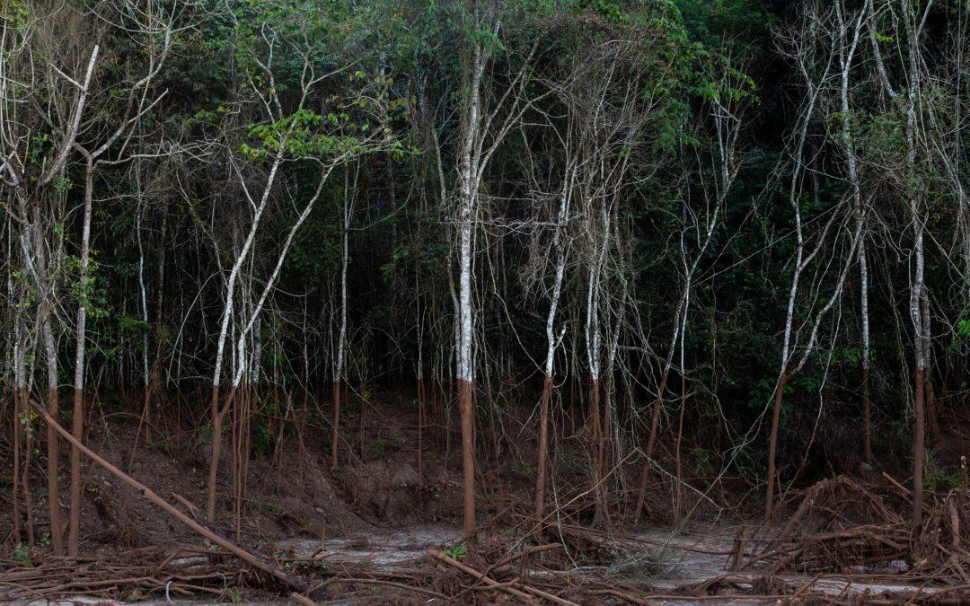AMAZÔNIA REAL: Fotógrafa registra os cinco anos da tragédia de Mariana
