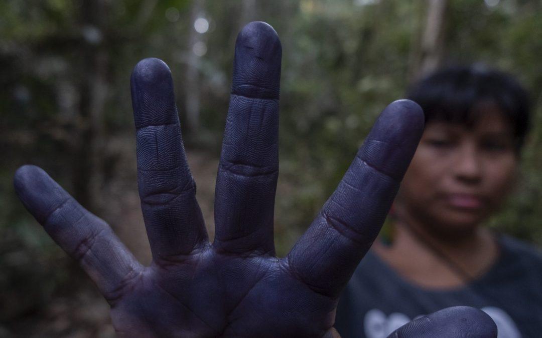 JORNALISTAS LIVRES: Autodemarcação Tupinambá reivindica reconhecimento do território no Pará
