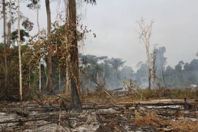 XINGU VIVO: Um balanço da situação da Amazônia sob Bolsonaro em tempos da Covid 19