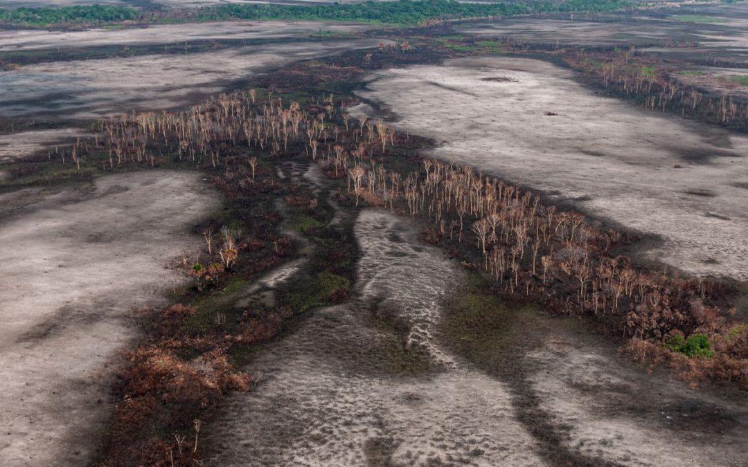 APIB: APIB exige à BlackRock que adote uma política de respeito aos direitos indígenas e proteção às florestas