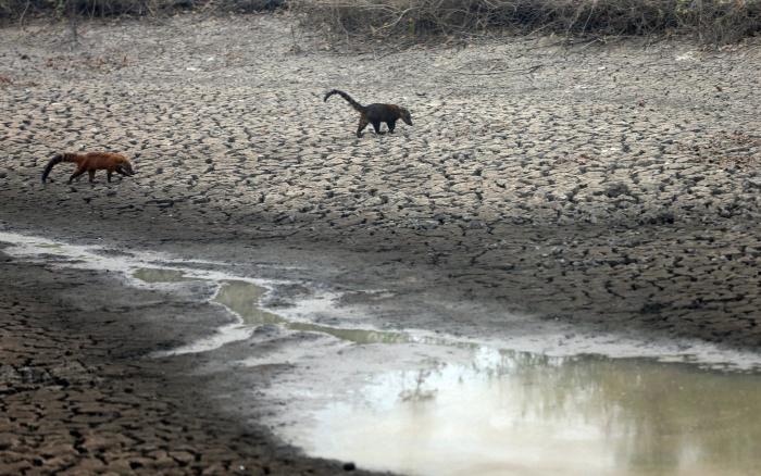 ISA: Pantanal sofre o pior período de queimadas dos últimos 50 anos