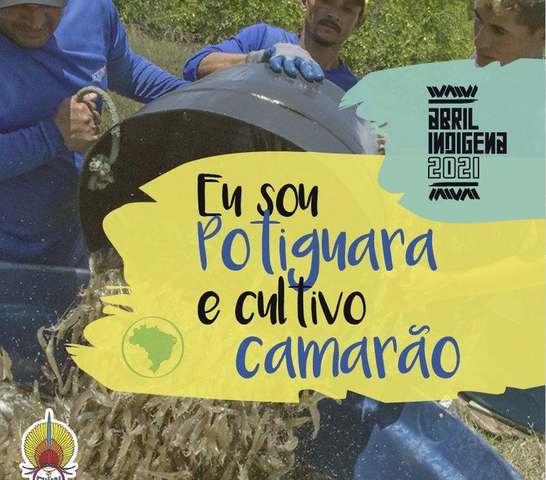 FUNAI: Abril Indígena: Funai apoia produção de camarão do Povo Potiguara na Paraíba
