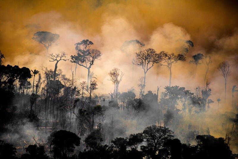 GREENPEACE: Um cheque em branco para os inimigos do meio ambiente no Brasil