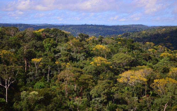 """ISA: Em meio a desmonte de proteção ambiental, Adote Um Parque tem cara de """"greenwashing"""""""