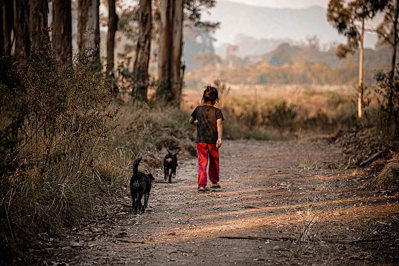 BRASIL DE FATO: Movimentos indígenas reocupam floresta no Paraná, após anos de abandono