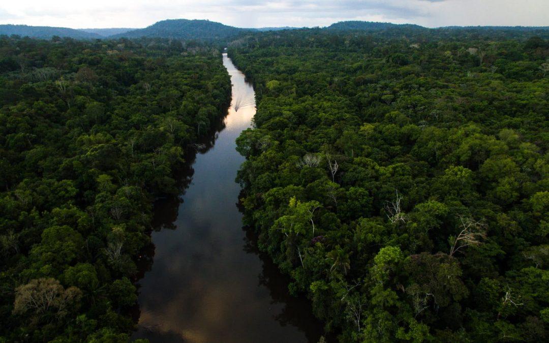 IEPÉ: Iepé publica suas contribuições para o Marco Global da Biodiversidade pós-2020