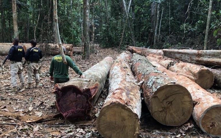 FUNAI: Funai participa de operação de combate ao desmatamento em Terras Indígenas do AM e RO