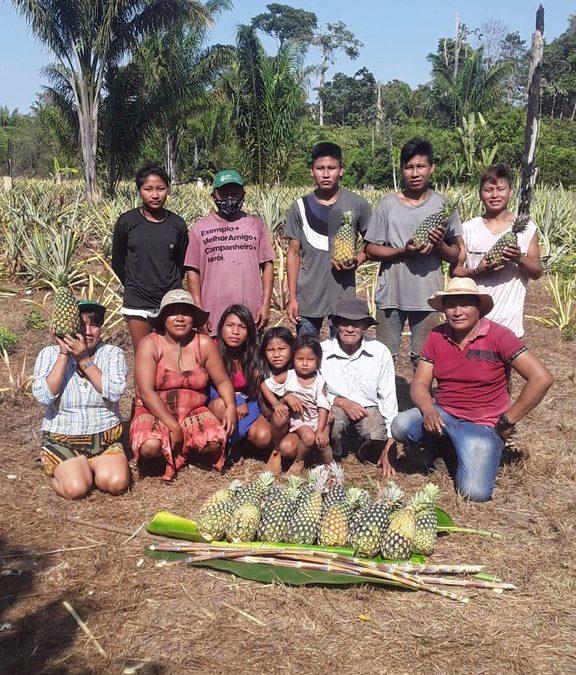 FUNAI: Funai apoia plantio de abacaxi e cana-de-açúcar em comunidade indígena do Mato Grosso