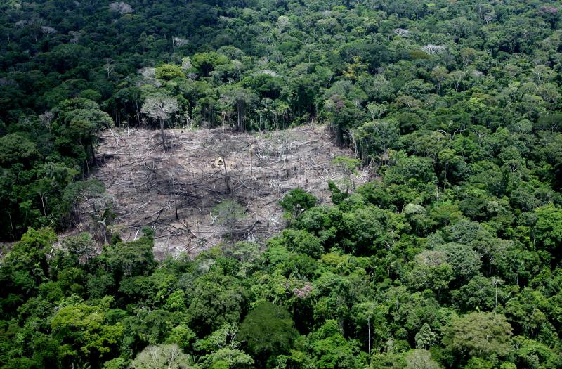 AMAZÔNIA NOTÍCIA E INFORMAÇÃO: TERRA INDÍGENA NO ACRE É FREIO PARA O DESMATAMENTO E PODE COMEÇAR A GERAR CRÉDITOS DE CARBONO